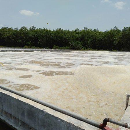 Xử lý nước thải bằng biện pháp sinh học