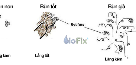 Bùn vi sinh hiếu khí trong hệ thống xử lý sinh học nói lên điều gì?
