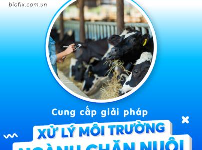 Giải pháp xử lý môi trường cho ngành chăn nuôi